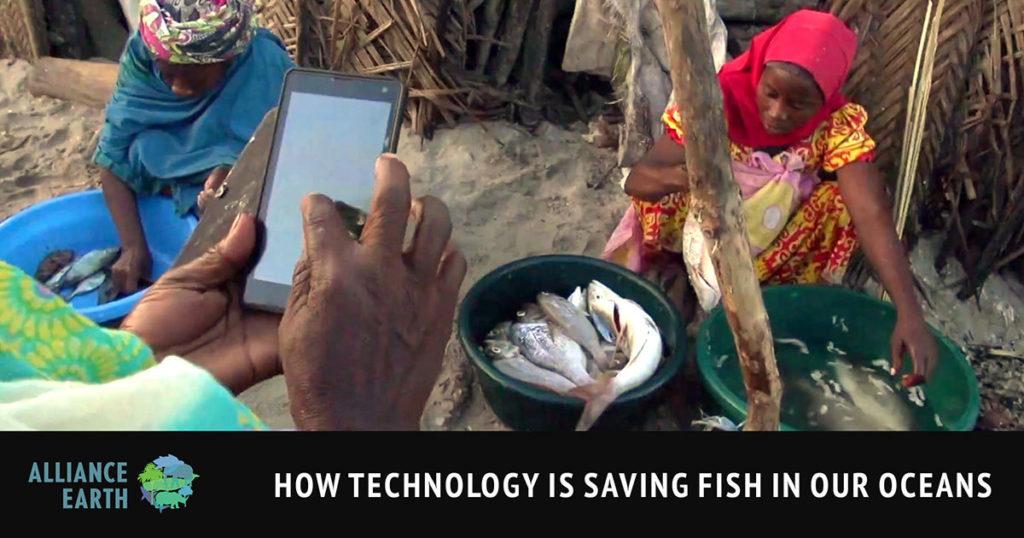 alliance earth saving fish blog